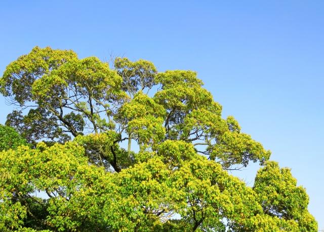 木のイメージ写真