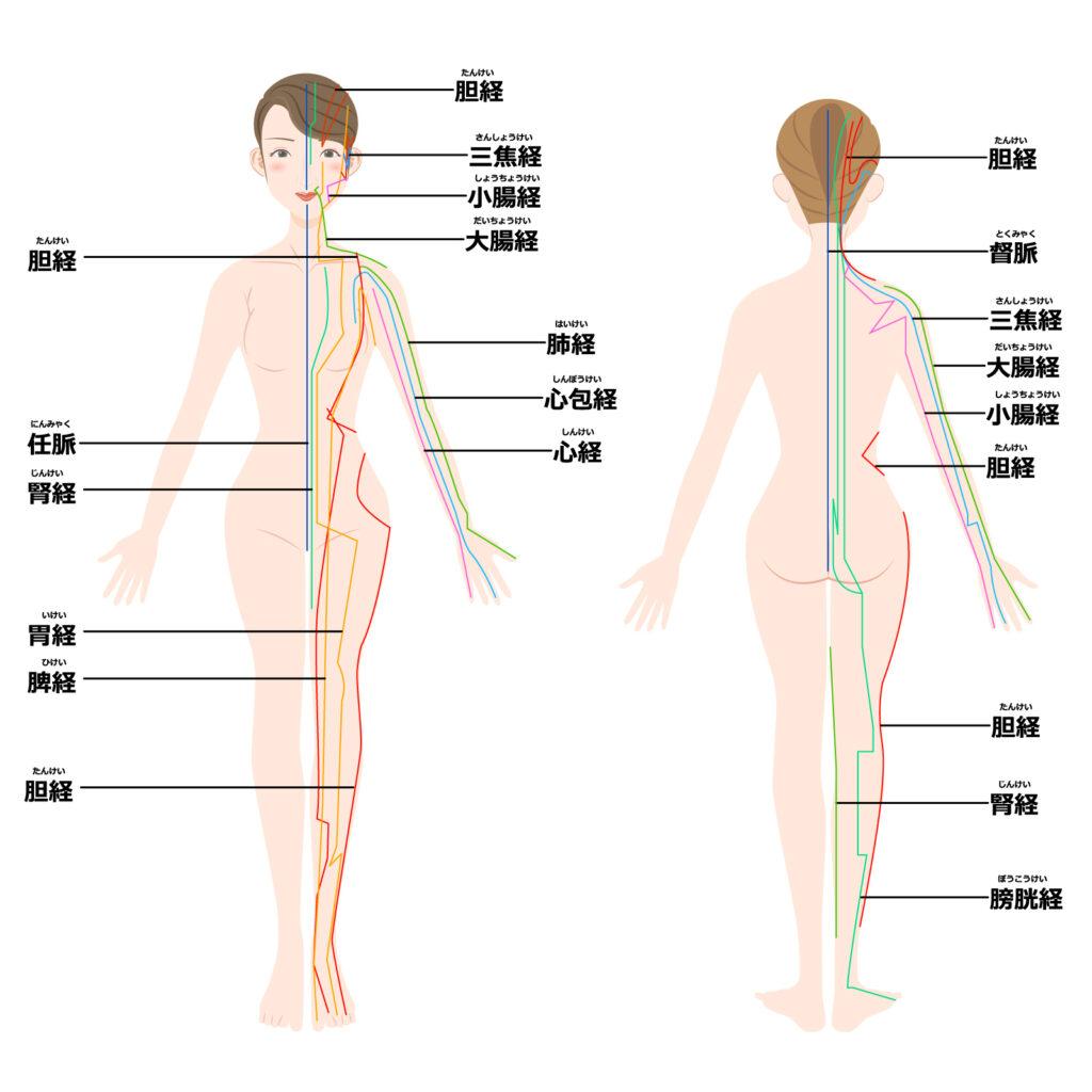 経絡の模式図