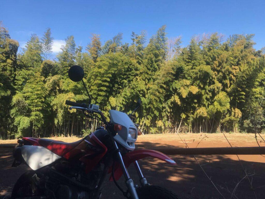 竹林の広がるとっておきの場所