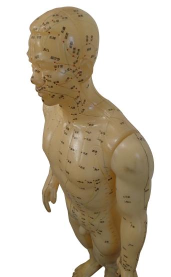 経絡を示した人形の写真