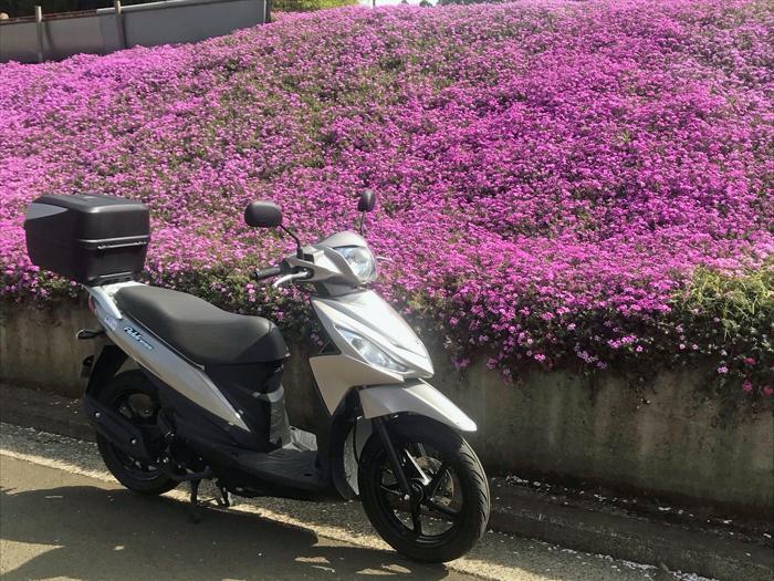 芝桜の前にスズキアドレス110