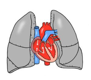 心臓のイメージイラスト