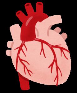 心臓イラスト